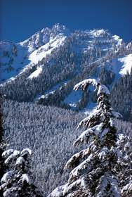 Winter Near Hurricane Ridge