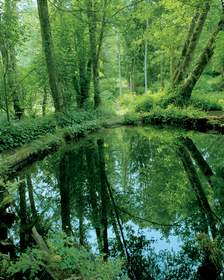 Lowland Forest Pond