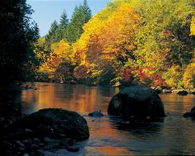 Autumn on the Sol Duc River